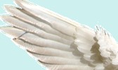 Angel Line